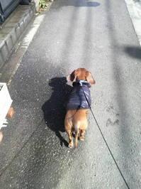 散歩2.JPGのサムネール画像