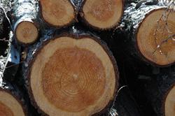 木材のイメージ