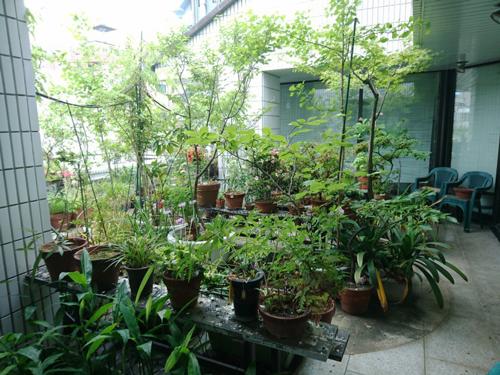 日本デオドール本社の庭