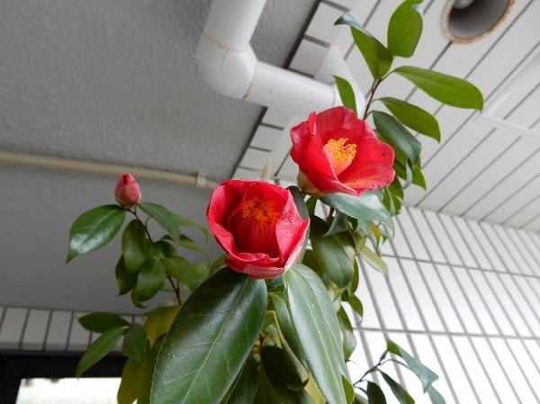 DSCN3368s-.jpg