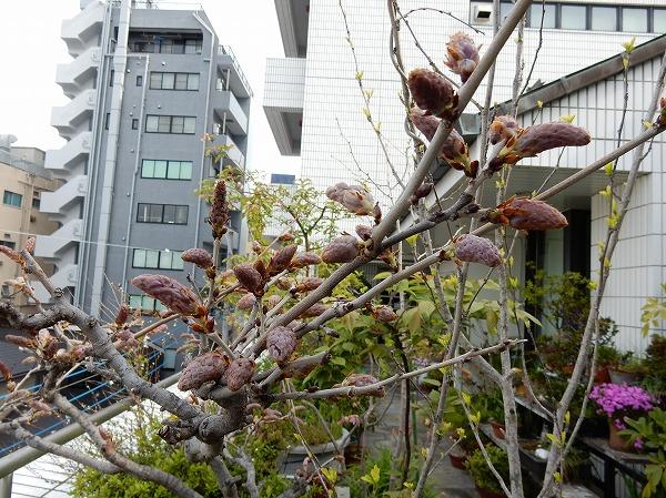 fuji-b2.jpg