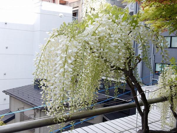 fuji-c3.jpg