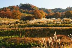 秋の里山イメージ