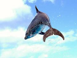 イルカのイメージ