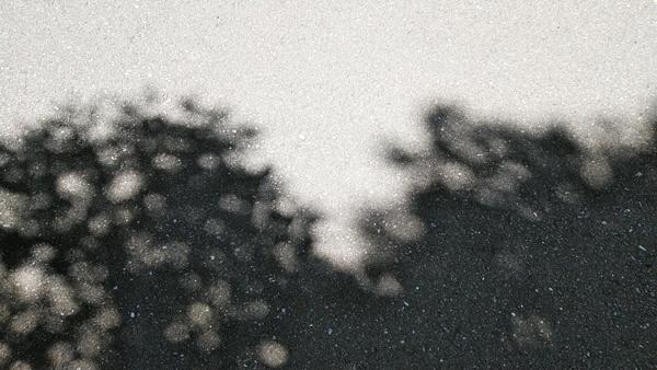 太陽に照らされた木陰