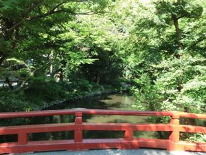 神社の森林浴