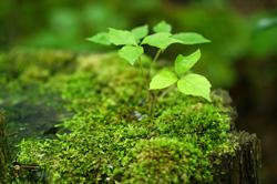 植物のフィトンチッド