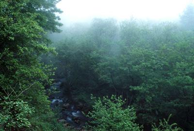 森林浴のイメージ