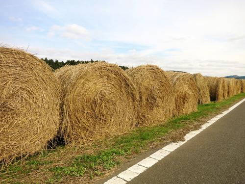 牧草のイメージ
