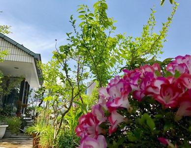 植物の多いデオドール庭