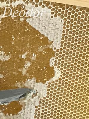 巣に詰まったハチミツ