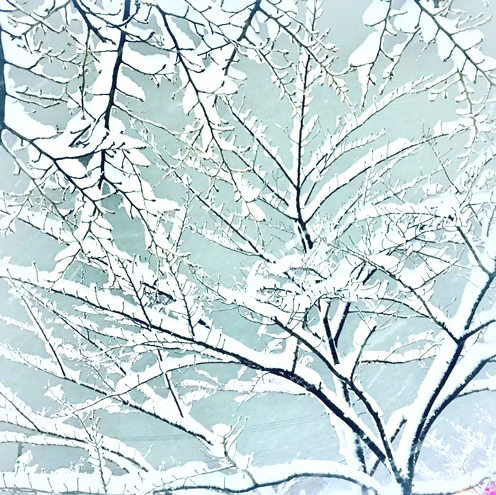 雪の景色1