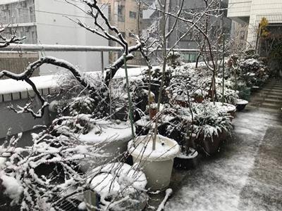 雪の景色2