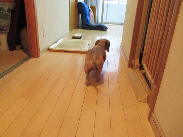 愛犬とトイレマット