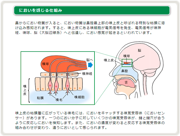 においを感じる仕組み(日本デオドール)